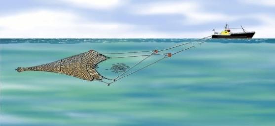 Pêche au chalut pélagique