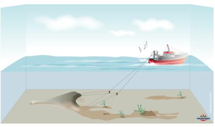Pêche au chalut de fond