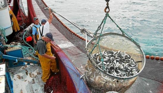 Les prises avec ce procédé de pêche
